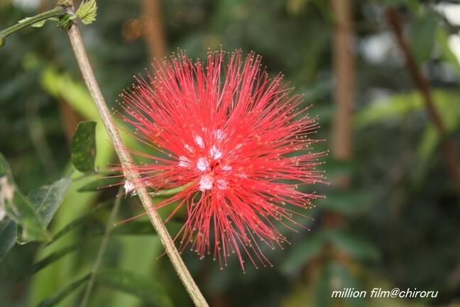 植物園の花