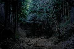 森の奥には・・