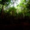 樹海に注ぐ光