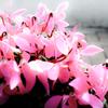 花として 花として