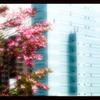 都会に咲く花