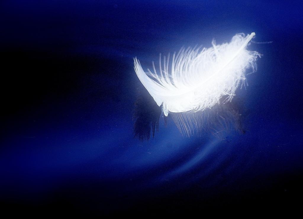 白鳥の羽舟