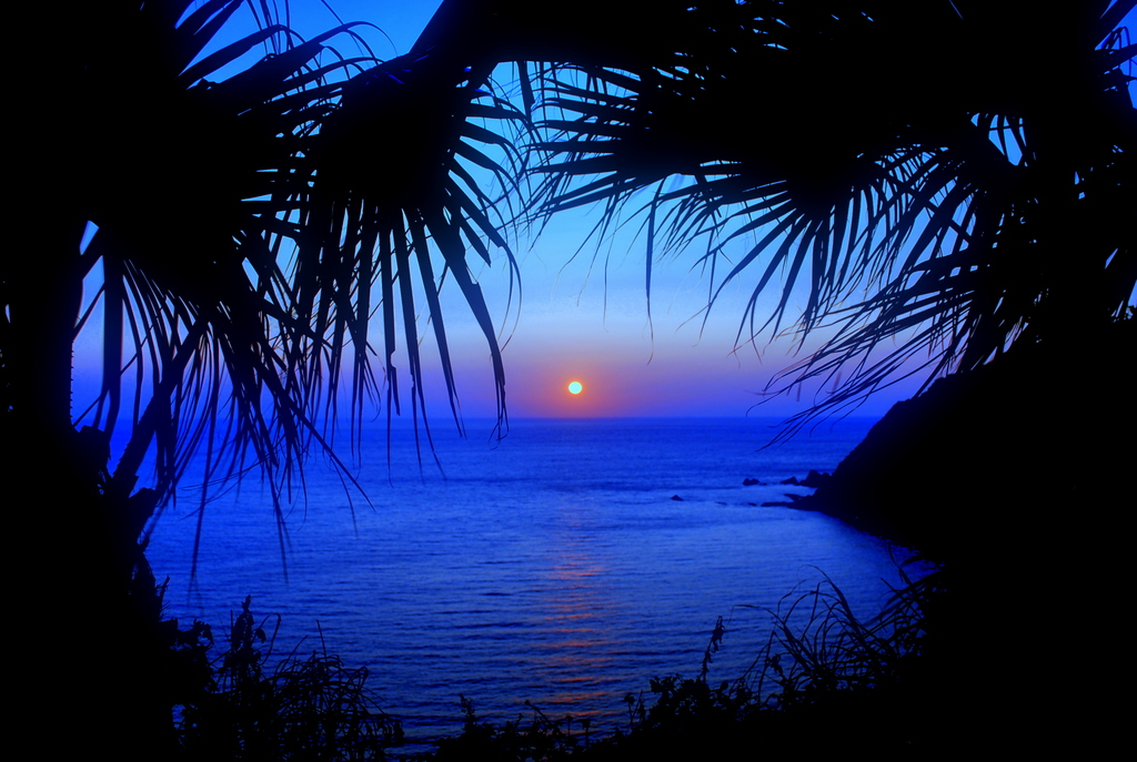夕陽とフェニックス