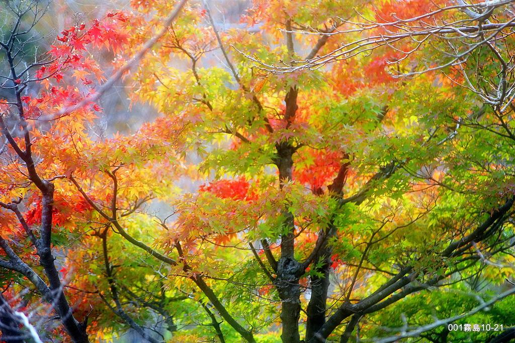 霧島国民休養地の紅葉