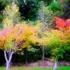 霧島高原の紅葉