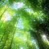 美術館の竹林