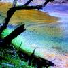 えびの高原の渓流