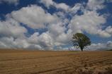 空と木と土と