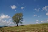空と木と土と 2