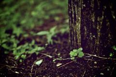Tiny green.