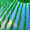 Rice field in the sky.