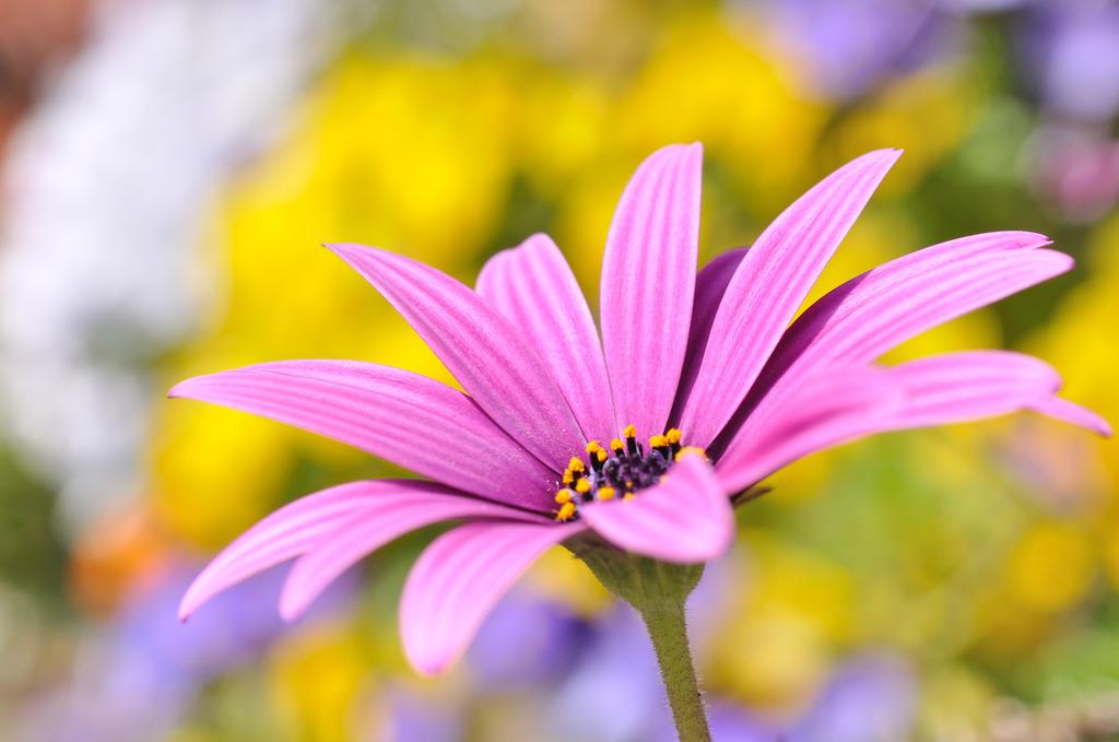 Blooming!!