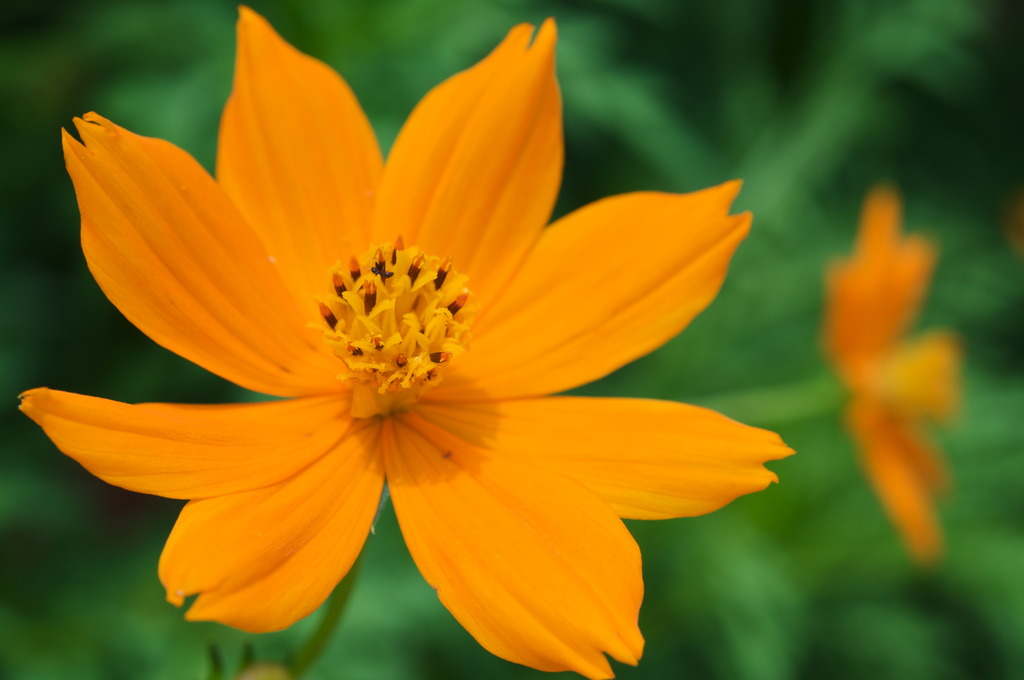 Vivid Orange