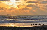 Morning stroll of gull