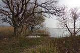 冬枯れの西の湖・・・⑪