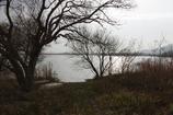 冬枯れの西の湖・・・⑩