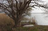 冬枯れの西の湖・・・⑫