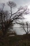冬枯れの西の湖・・・⑬