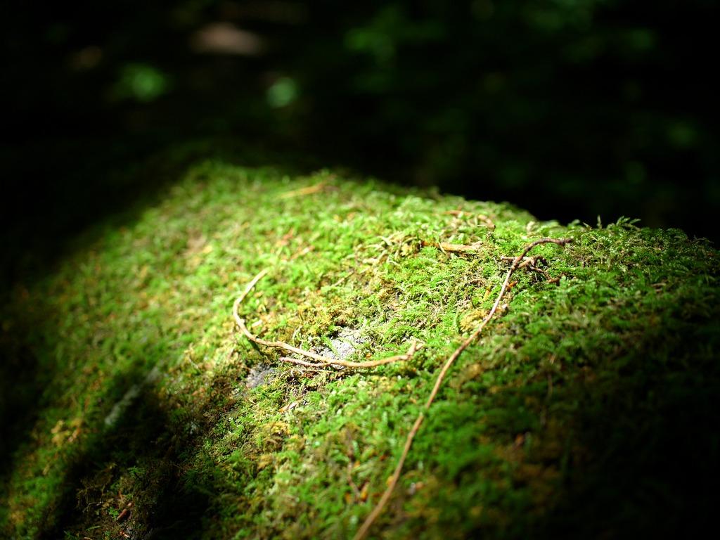 自然のスポットライト