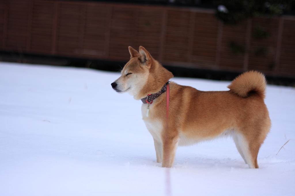 雪の中でなに思う…
