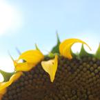 NIKON NIKON D80で撮影した植物(夏休み)の写真(画像)