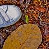 秋を踏みしめて。