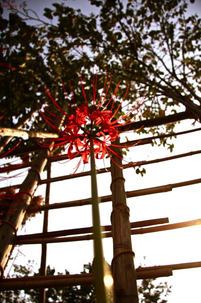 天上の花 Ⅱ