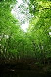 美人と呼ばれる林
