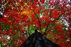 紅葉→高揚