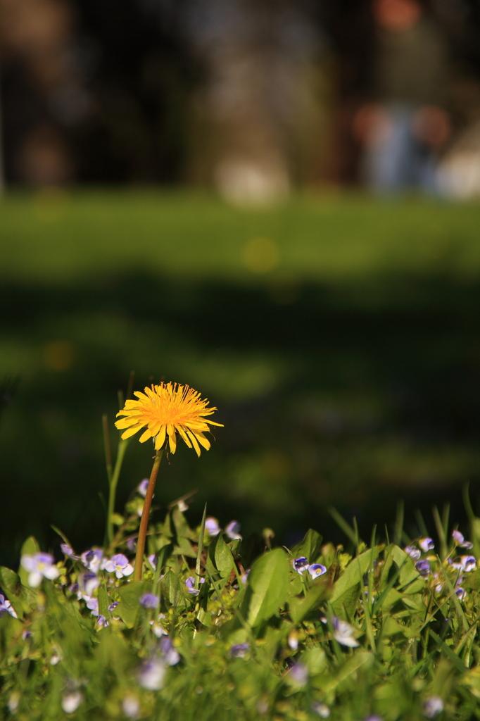 Spring has come...
