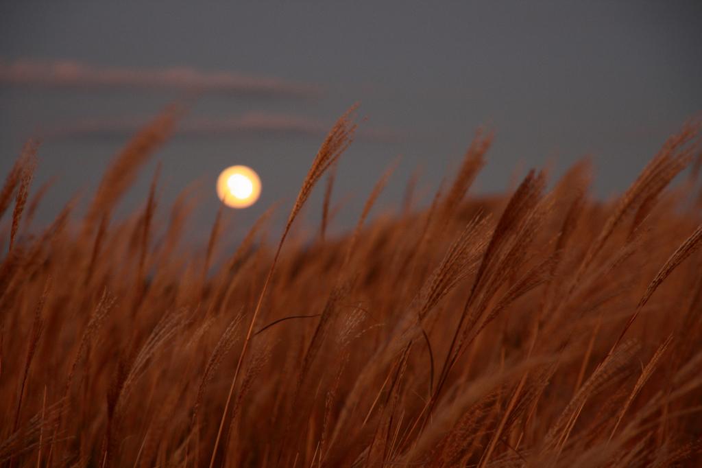 月に会う。