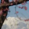 富士と河津桜