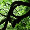 森の中の芸術