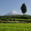 大渕の茶畑