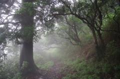 霧の愛鷹山登山道