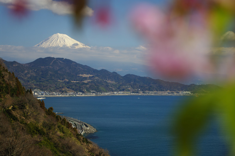 桜と富士と海