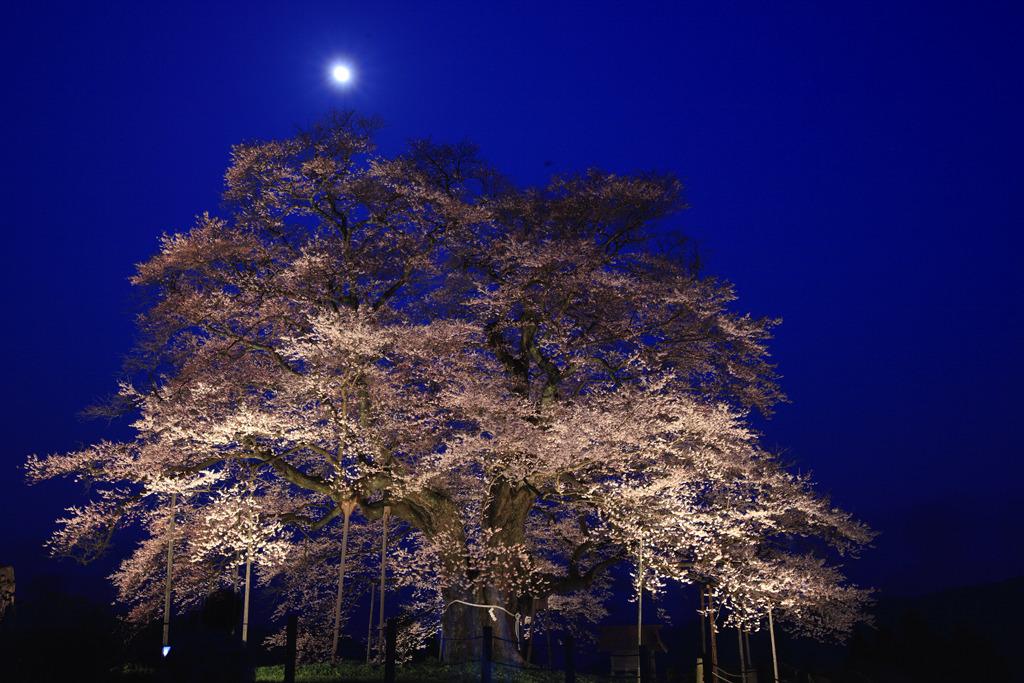月夜の下で