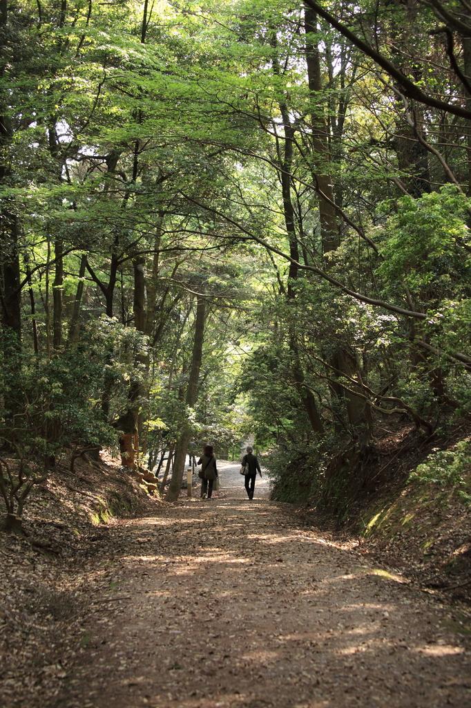 紀伊神社からの参道