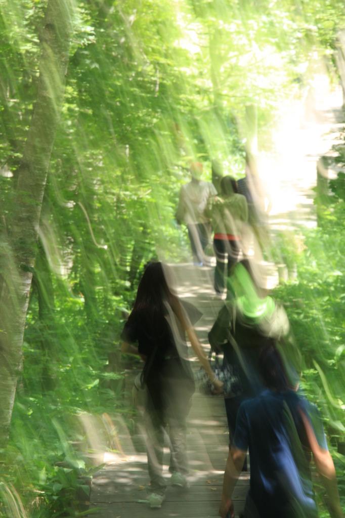 こもれびの木道