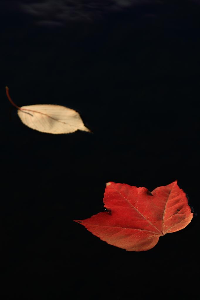 落葉の競演