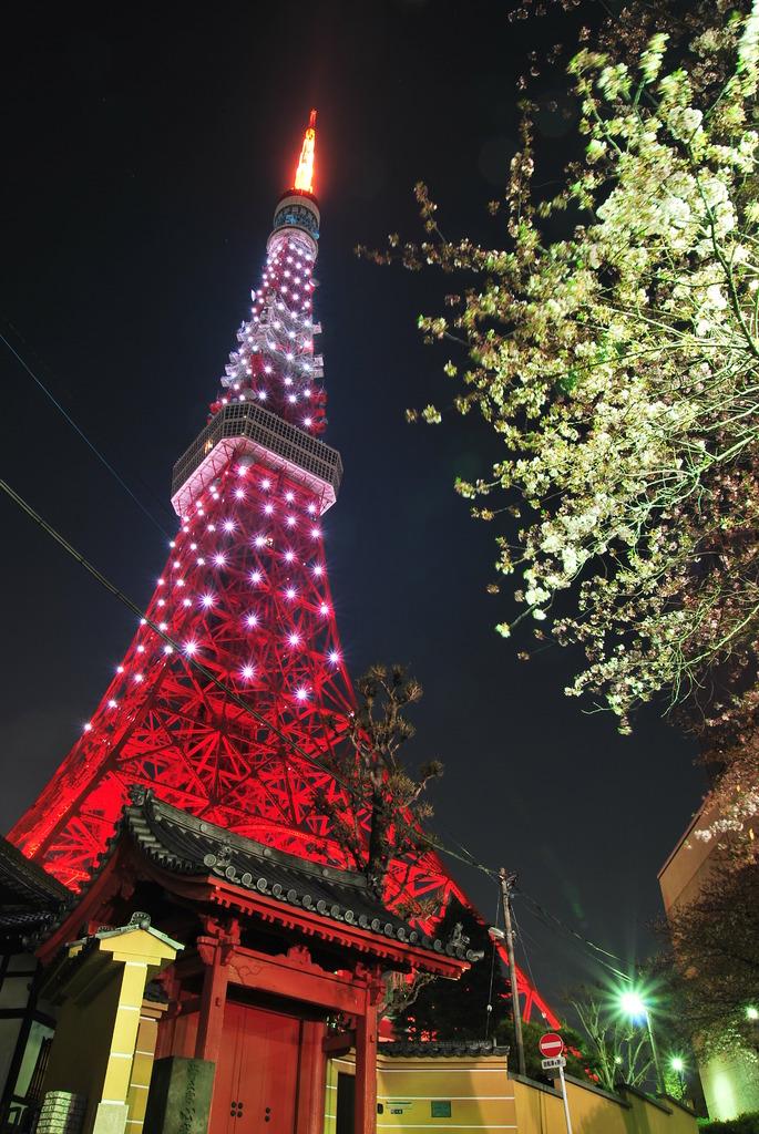 夜桜と東京タワー