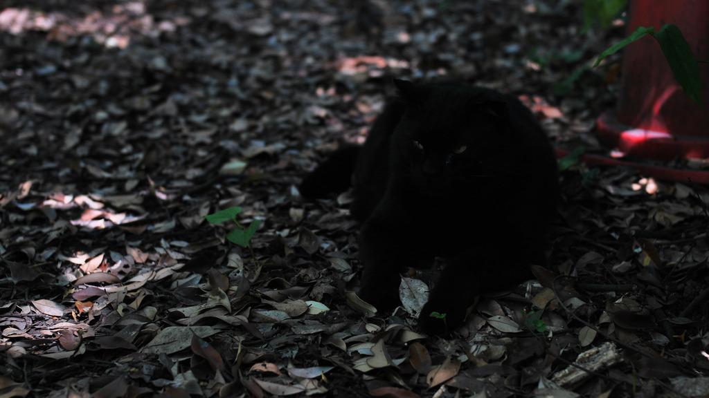 暗がりに光るモノ・・