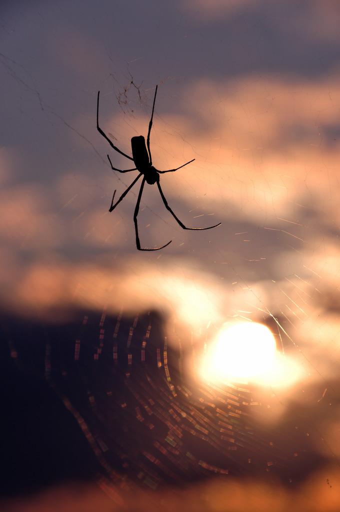 夕焼けと蜘蛛