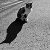 猫の日と言う事で・・・