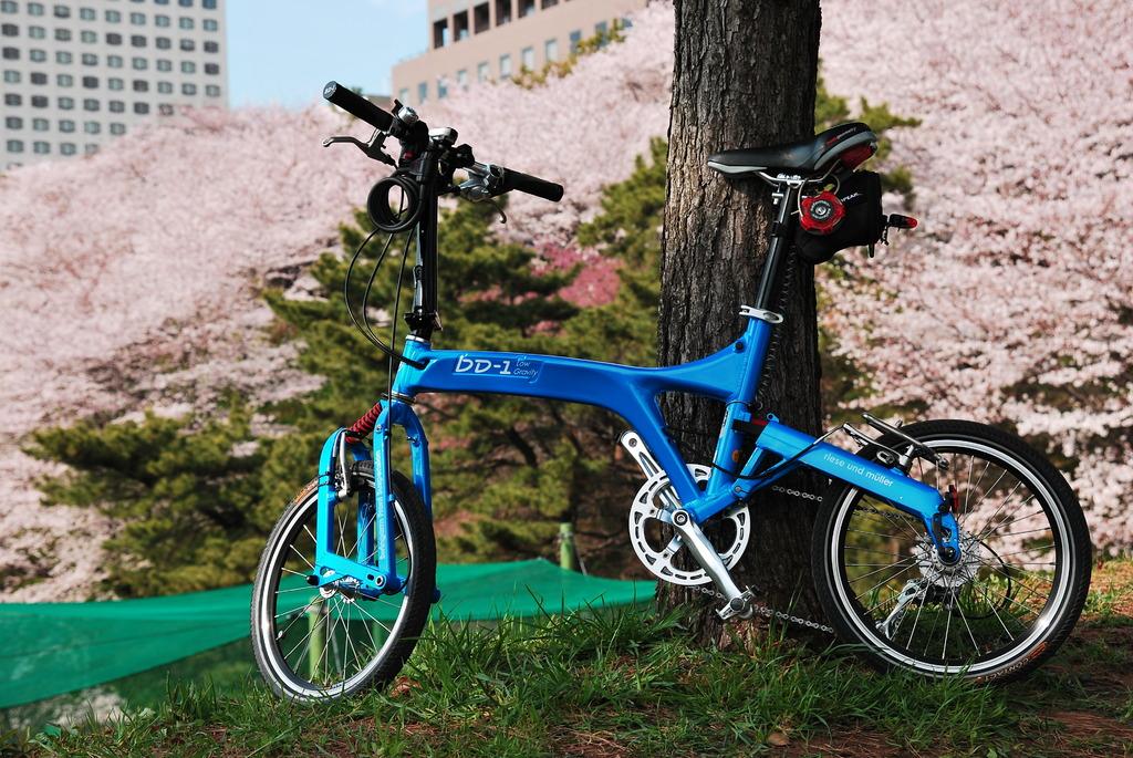 桜とミニベロ