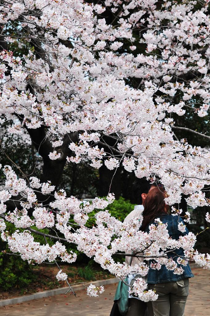 桜とふたりβ