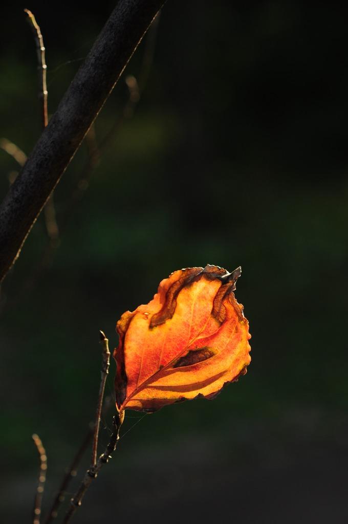 小さい秋Ⅱ