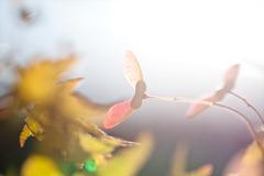 秋なのね~2