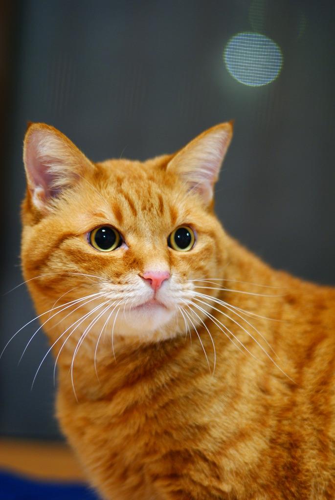 猫ポートレート No.014