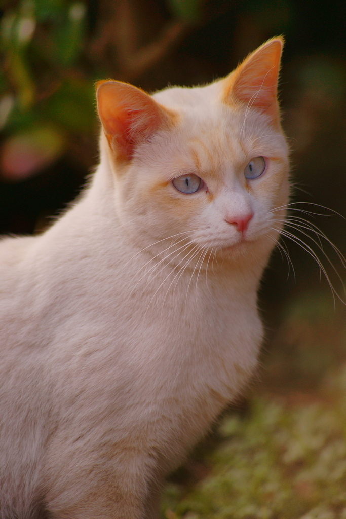 猫ポートレート No.002